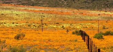 The 6-Day Namaqualand Spring Flower WALKING Tour