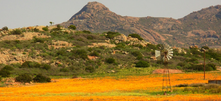 "The ""One&Only"" 5-Day Namaqualand Spring Flower Tour"